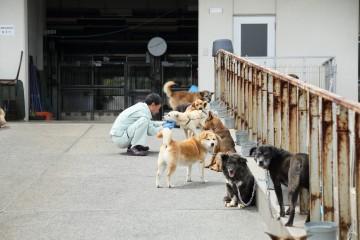 犬の殺処分ゼロを達成した熊本市動物愛護センター