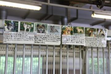 施設内の犬3