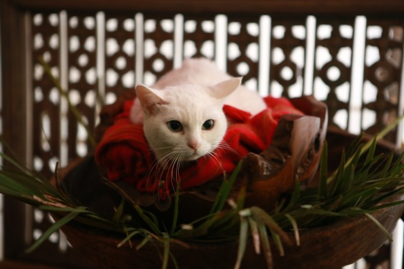 『猫侍 南の島へ行く』より_4