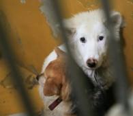 白い犬_eye