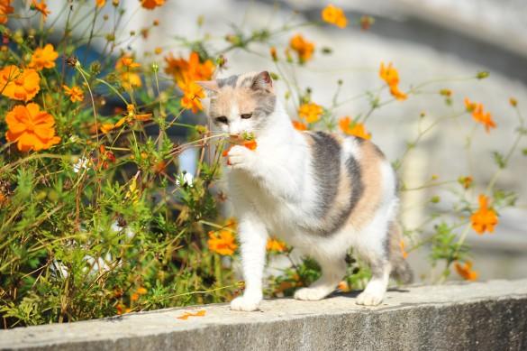 先生と迷い猫_お花
