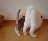 子猫とおちり
