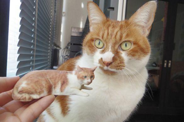 フィギュアと愛猫「むぎ」