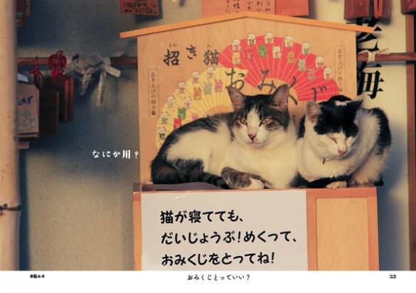 福井県のねこ寺「御誕生寺」の猫たち