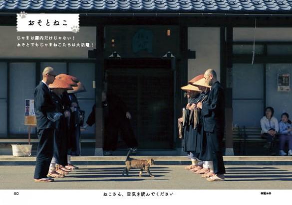 托鉢前の儀式の中を闊歩する猫さん