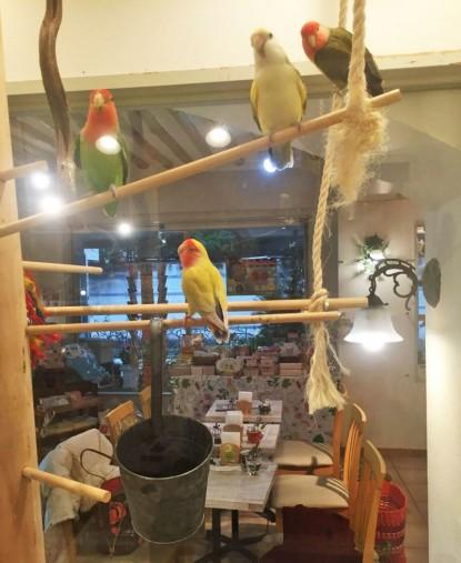 鳥はガラスケースの中