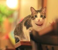 猫写ニッキ7