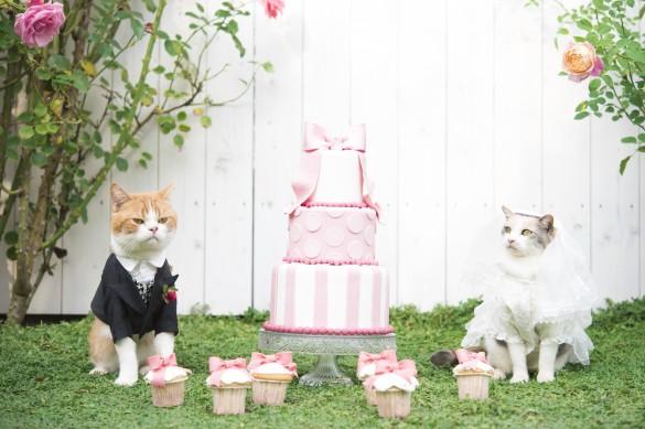 アイドル猫の結婚式