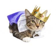王冠をかぶった王子ネコ
