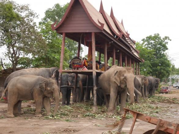 エヴァさんの施設の象たち
