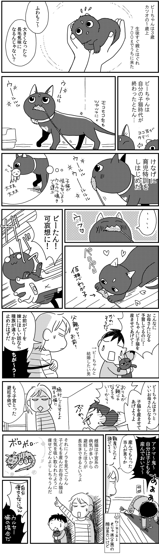 うちの猫マッチョ