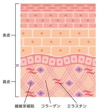 コラーゲン図