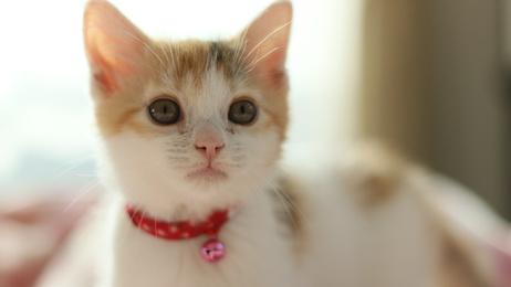 猫の首に鈴