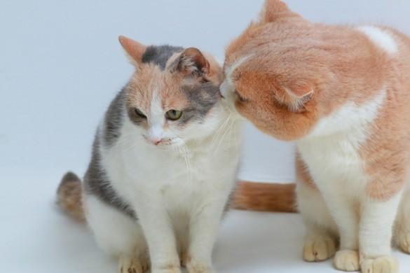 ドロップ(左)とシナモン