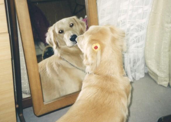 鏡を見るケフィ