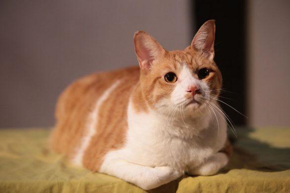 『猫忍』より_1