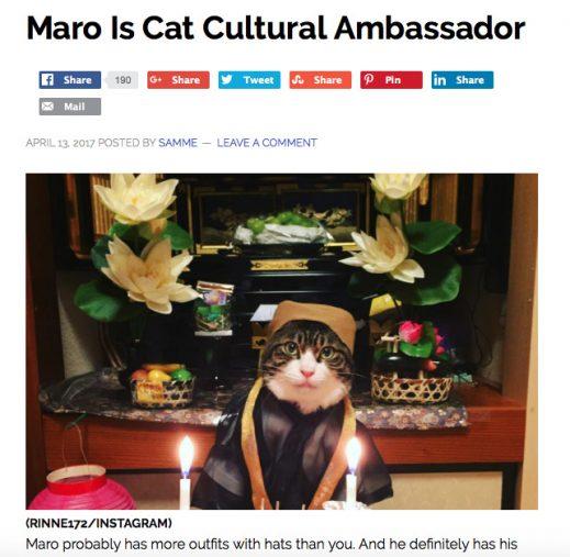 海外サイト「LIFE WITH CATS」で紹介されたマロくん