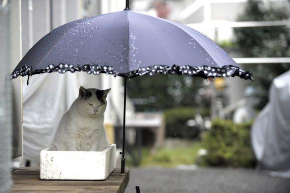 ぽー傘の下