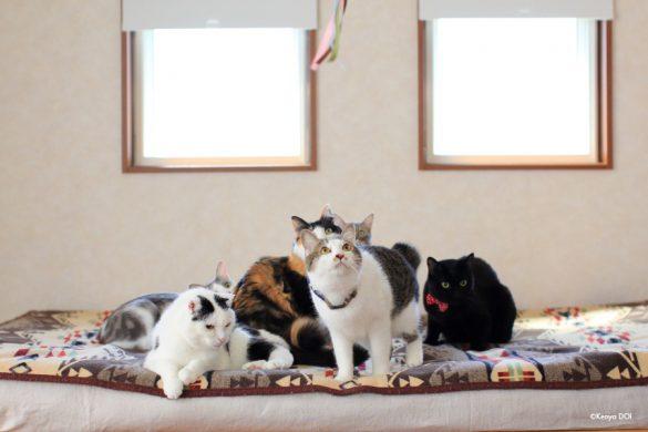 大人の猫たち