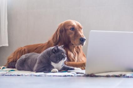 犬と猫とパソコン