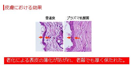 皮膚における効果