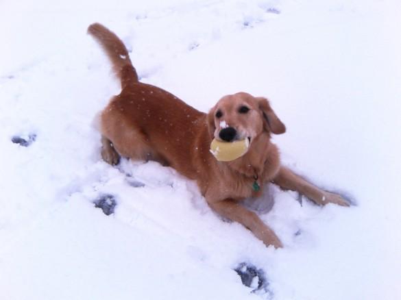 元気だったころ、雪の上で遊ぶケフィ