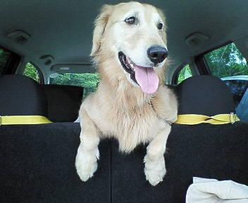 ケフィと車でお出かけ