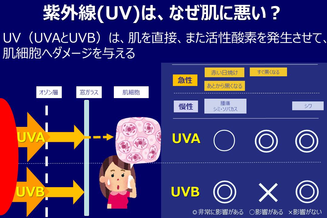 紫外線(UV)UVAとUVB