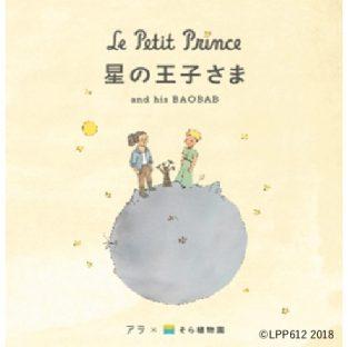 西畠清順氏本人のイラストが描き加えられていたパッケージ
