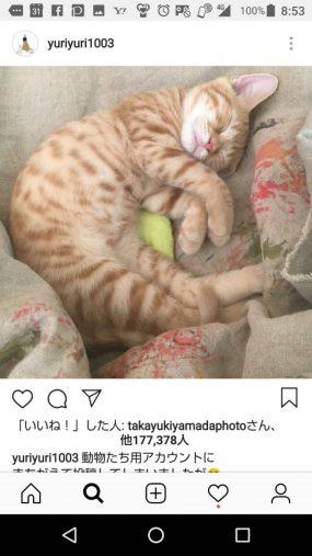 インスタ疲れで休止可能性もある石田ゆり子のネコ写真にも「いいね!」