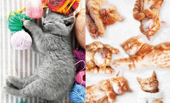 『ニャンとも目がよくなるネコの写真』より