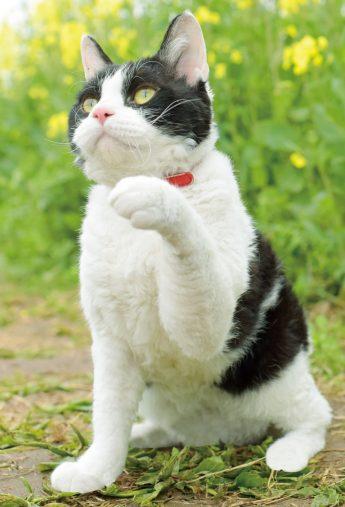 『旅猫リポート』より