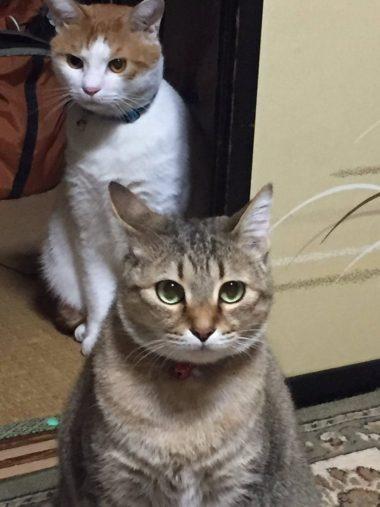 茶色さんとお嬢ちゃん