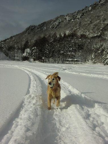 雪の中で遊ぶケフィ