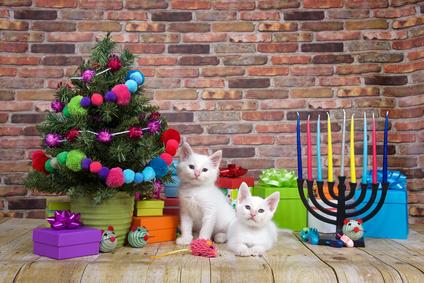 子猫 クリスマスとハヌカ Christmas and Hanukkah. Chrismukkah.