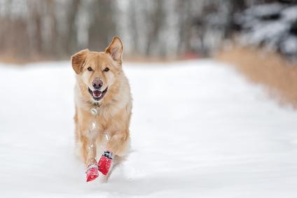 雪の中の犬ブーツ