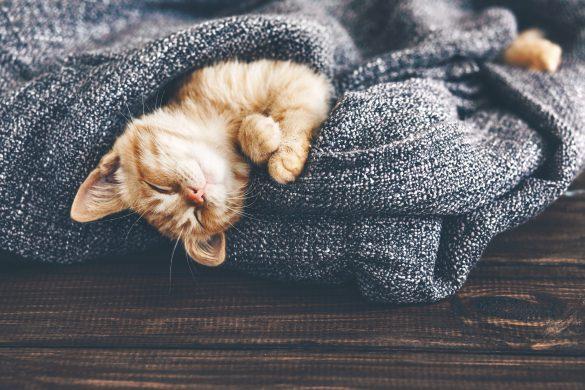 猫は飼うのではなく、一緒に暮らしてもらう