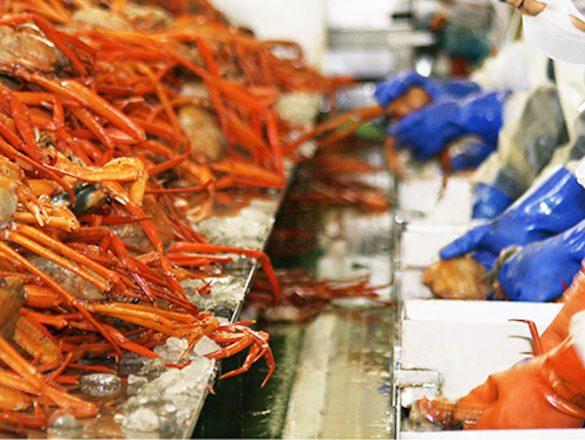 水揚げ量日本一を誇る、地元境港市で獲れた「紅ずわいがに」を使用