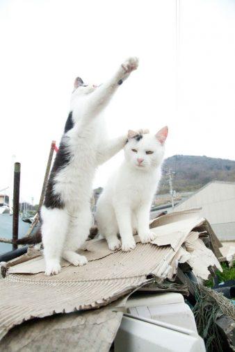 山本正義著『立ち猫』(ナツメ社)