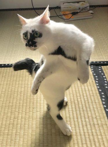 熱海 Muddy Cat