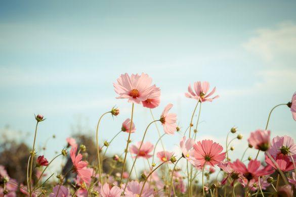 愛は存在しない、一瞬の幻や勘違い