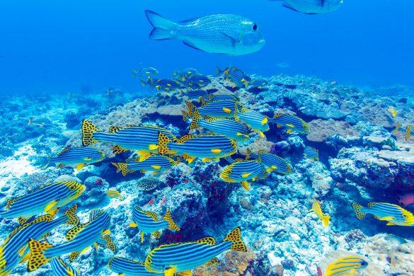 ハワイの美しい海とサンゴ礁を守ろう