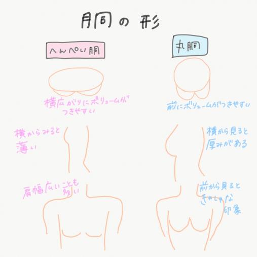 バストサイズ 胴の形