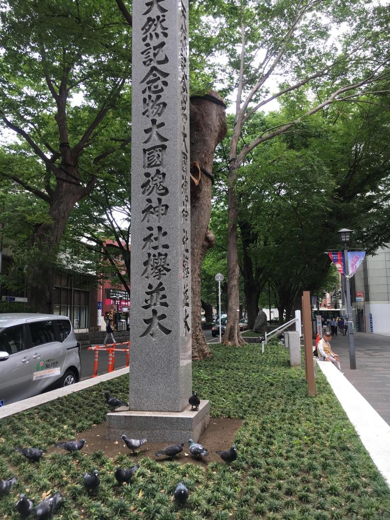 駅前のケヤキ並木