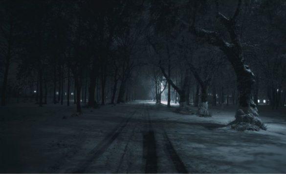 夜公園冬木立ち林
