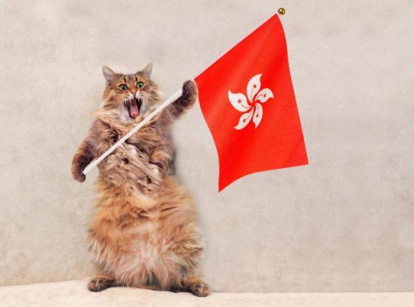 香港の旗を持つ猫