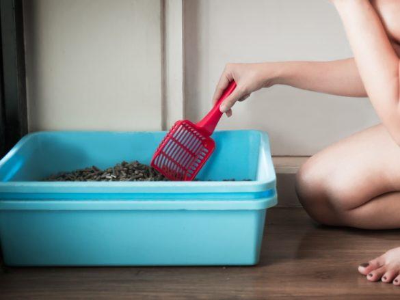 トイレ 掃除 猫