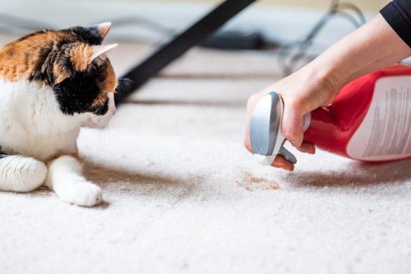 猫 粗相 掃除