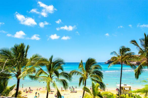 ハワイの進化系タピオカドリンク4つ