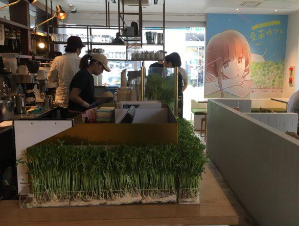 豆苗カフェ(期間限定)店内の様子